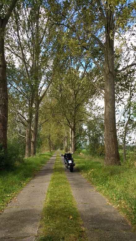 Bild von einem Motorrad auf Plattenweg im Rhinluch mit Alleebaeumen bei einer Havel Motorradtour