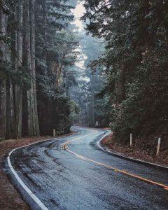 California 35 bei Nebelnaessen im Wald