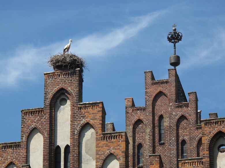 Bild mit Storch in seinem Nest auf dem Giebel des Rathauses des Storchendorfes Linum Havelland