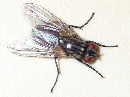 Von Insekten verklebtes Helmvisier erfordert Reinigung