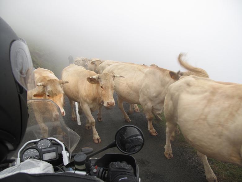 Bild von einer BMW R 1200 GS im dichten Nebel mit entgegenkommenden Kühen