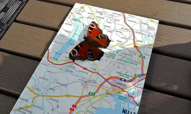 Bild von einem Schmetterling auf einer Landkarte als Begleiter des Solo Motorradfahrers bei einer Marschpause