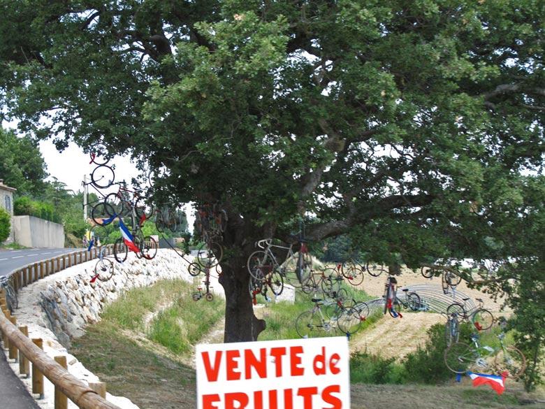 Bild von einem Baum am Straßenrand in der Naehe des Mont Ventoux, der mit zahlreichen Fahrraedern behaengt ist