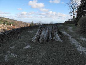 Bild vom Baumstumpf der Friedenslinde in Riverie im Département Rhône (Frankreich)