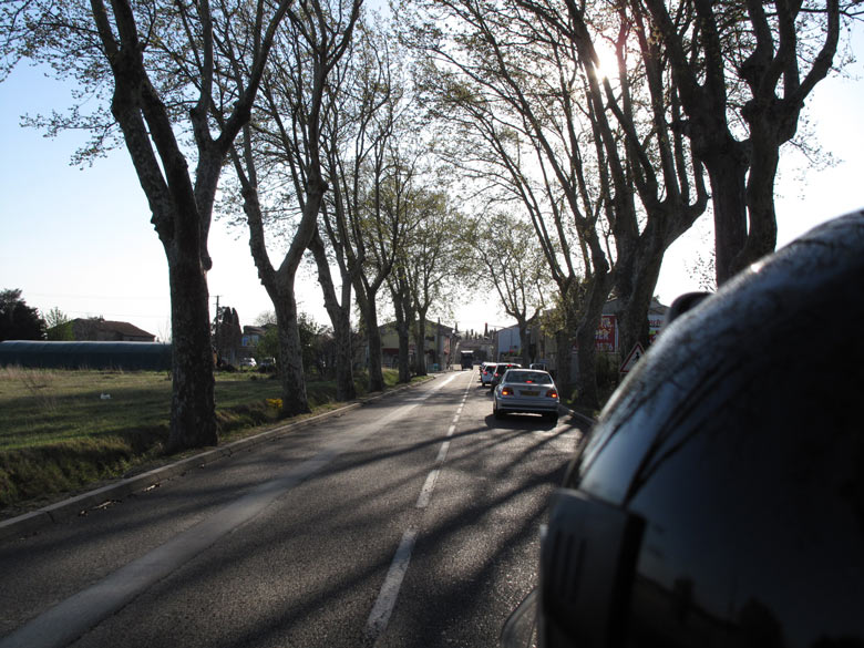 Allee in der Provence im Vorfrühling, aufgenommen bei einer Motorradtour durch Provence und Camargue