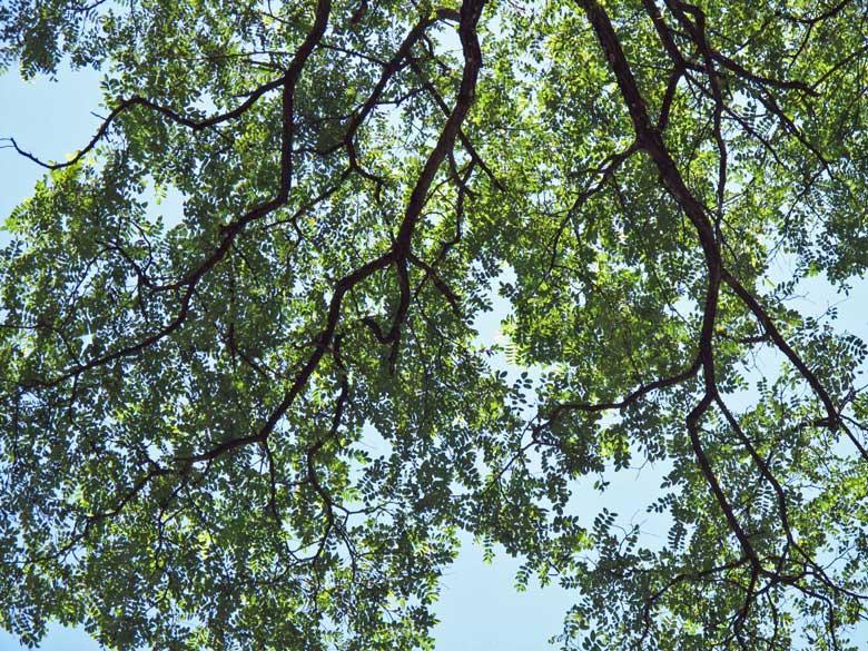 Bild von einem Baum im Forêt de Vallin, dem magischen Druidenwald zwischen Lyon und Chambéry im französischen Département Isère