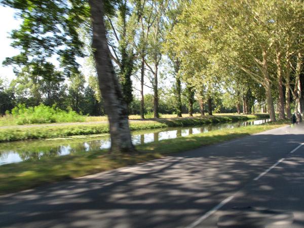 Bild einer Platanenallee am Dordogne Seitenkanal in Südwestfrankreich bei einer Motorradtour Südwestfrankreich Teil 1