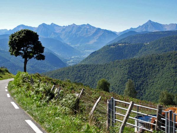 Passstrasse des Col d'Aspin in den französischen Pyrenäen mit Panorama in das Tal hinunter, einer Pinie und einer Kuh auf der Weide
