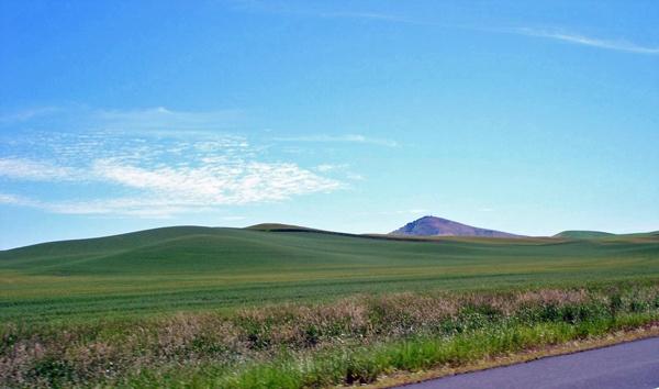 Bild der Grüne Hügel entlang der U.S. 195 in Washington State