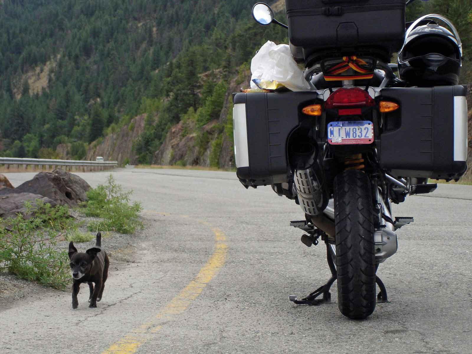 Bild von einer Pause im Clark Fork Valley Montana mit einem Motorrad und einem kleinen Hund bei einer Motorradtour durch die Rocky Mountains