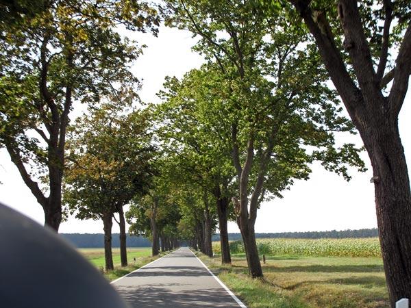 Alleenstraße in Brandenburg, aufgenommen bei einer Motorradtour nach Torgau an der Elbe