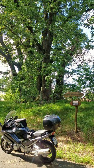Sieben Brueder Eiche in Friesack im Havelland mit einem schwarzen Motorrad davor