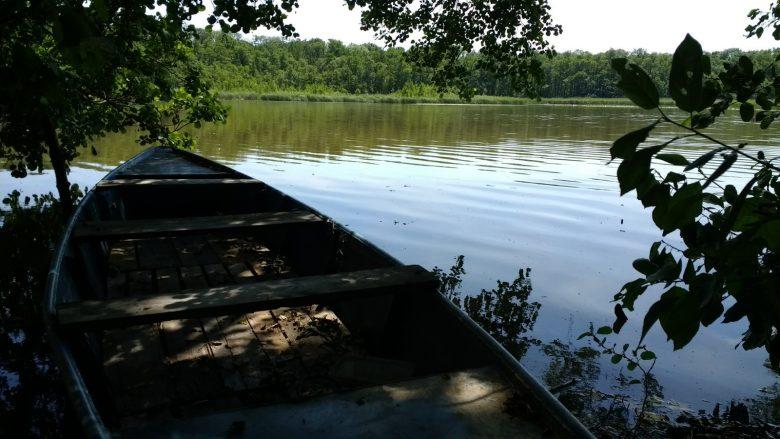 Kahn unter Bäumen am Görner See in Brandenburg