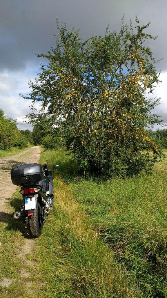 Motorrad vor Mirabellenbaum in Osterne bei einer Motorradtour durch die Uckermark