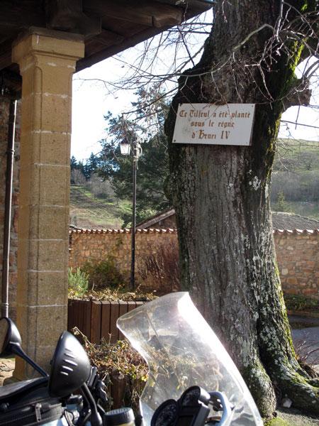 historische linde in chambost-allières, gesehen bei einer winterlichen motorradtour im beaujolais
