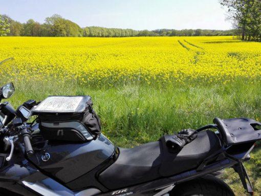 Bild von einer Motorradtour Hoher Fläming mit einer anthrazitgrauen Yamaha FJR 1300 vor einem goldgelben Rapsfeld mit Traktorspuren