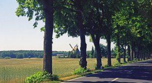 Allee in Brandenburg mit einer Windmühle bei einer Motorrad-Erkundungstour zu Architektur und Musik in Brandenburg
