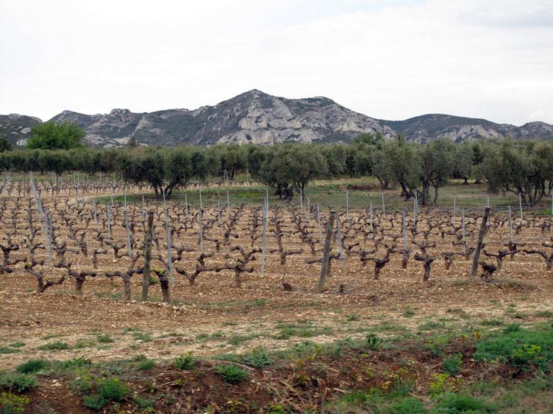 Les Alpilles in Südfrankreich mit einem Weinberg und einem Olivenhain im Vordergrund und der Bergkette im Hintergrund