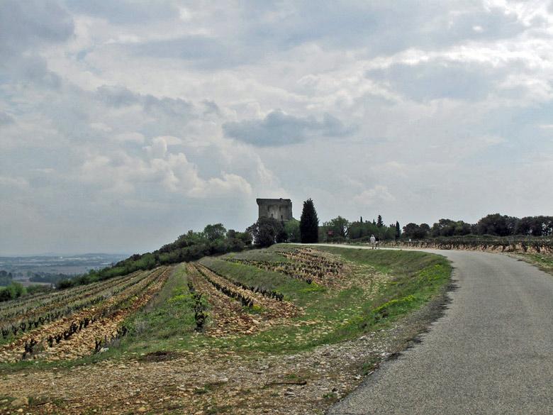 Chateauneuf du Pape inmitten der Weinberge