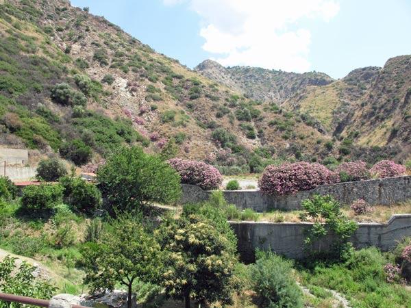 Bergamottebäume und Oleanderbüsche in einem Bergtal in Kalabrien
