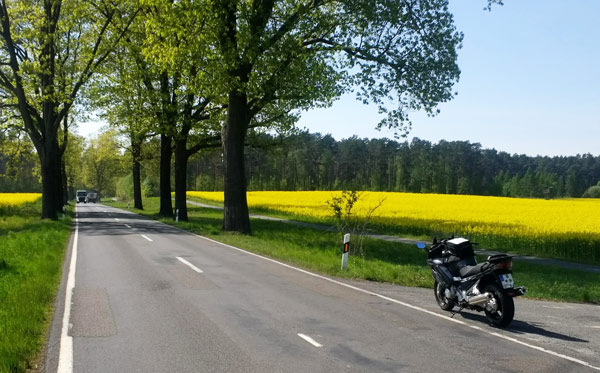 Tourentipps für den Motorradurlaub 2021: motorrad auf der deutschen alleenstrasse mit einem gelben rapsfeld im hintergrund