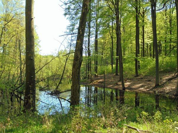 grumsiner forst im biospaerenreservat schorfheide-chorin