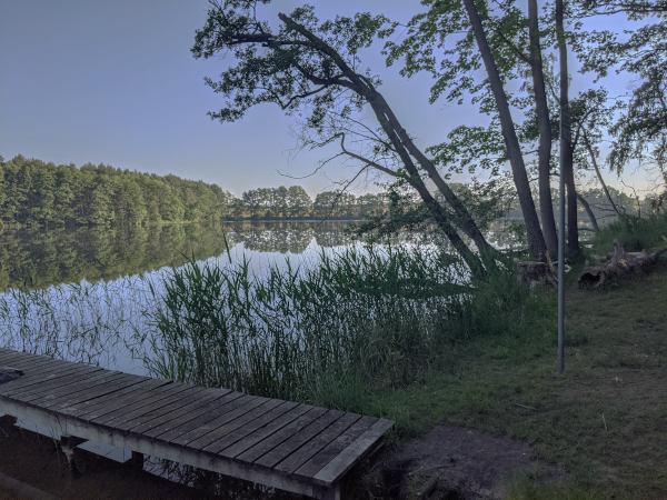 fruehstart in den sommertag: see im wald
